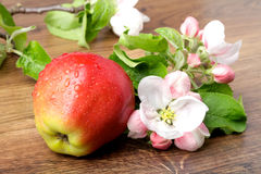 Apple flowers and ripe red apples Stock Image