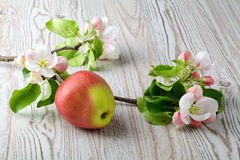 Apple flowers and ripe red apples Stock Photo