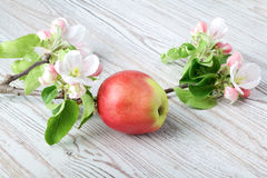 Apple flowers and ripe red apples Royalty Free Stock Image