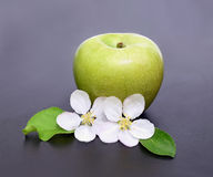 Apple flowers and ripe red green apple on  background close-up Royalty Free Stock Photography