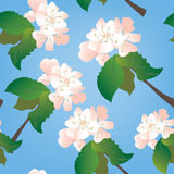 Apple flowers seamless pattern Royalty Free Stock Image