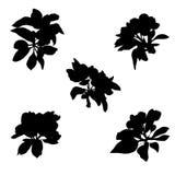 Apple flowers silhouettes Stock Photos