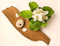 Apple flowers and stone with a hole on a piece of bark Royalty Free Stock Image