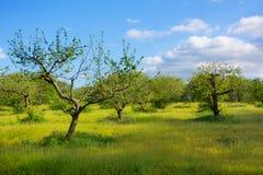 Apple font du jardinage Image stock