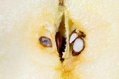 Apple frö Fotografering för Bildbyråer