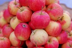 Apple-Früchte Stockfoto