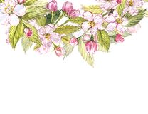 Apple frame botanical illustration. Card design with apple flowers and leaf. Watercolor botanical illustration isolated. On white background Stock Photo