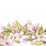 Apple frame botanical illustration. Card design with apple flowers and leaf. Watercolor botanical illustration isolated. On white background Stock Photos