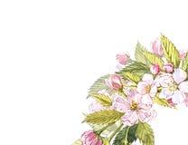 Apple frame botanical illustration. Card design with apple flowers and leaf. Watercolor botanical illustration isolated. On white background Royalty Free Stock Photo