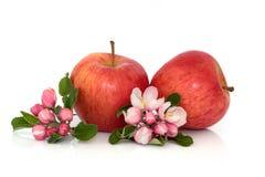 Apple-Frucht mit Blüte lizenzfreie stockfotos
