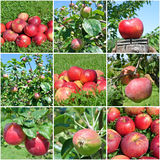 Apple fruit collage Royalty Free Stock Photo
