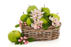 Apple Fruit and Flower Blossom Stock Images