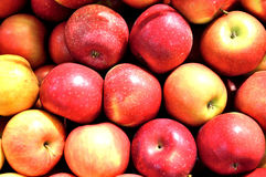 Apple, biological, fruit,food,organic. Group of apples in the chest Stock Photos