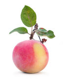 Apple fruit with leaf Royalty Free Stock Photos