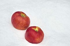 Apple fruit refrigerate in the snow-drift at garden Stock Images