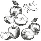 Apple fruit set hand drawn vector illustration sketch Royalty Free Stock Photography