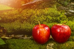 Apple-Fruit, Vers Fruit, Gezond Voedsel, Moss Background Royalty-vrije Stock Afbeeldingen