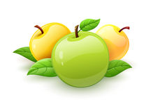 Apple fruits with green leaves vector Stock Photos