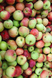 Apple fruits Stock Photography