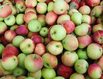 Apple fruits Stock Photos