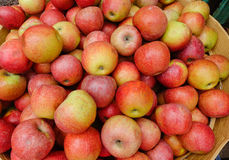 Apple fruits Royalty Free Stock Photography