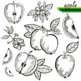 Apple fruits set Stock Photography