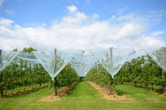 Apple fruktträdgård i Frankrike Royaltyfri Foto