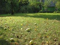 Apple fruktträdgård i nedgången Royaltyfria Bilder