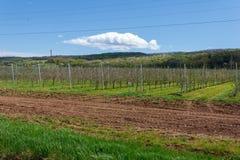 Apple fruktträdgård med unga unga träd Arkivfoto