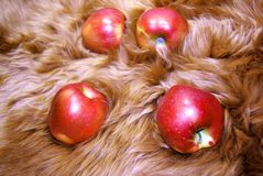 Apple on fur Stock Images