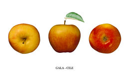 Apple Gala (Chile) isolated on white. Three points of view Stock Photos
