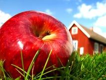 Apple in garden 2 stock image
