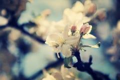 Apple garden Stock Photography