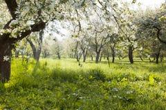 Apple garden Stock Photo