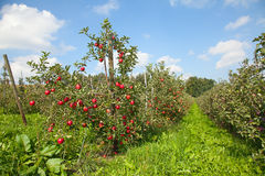 Apple garden Royalty Free Stock Images