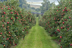 Apple garden Royalty Free Stock Photos