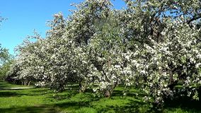 Apple garden stock video footage