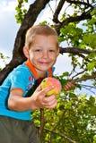 Apple garden. A boy collects apples in the garden stock photos