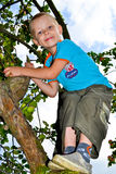 Apple garden. A boy collects apples in the garden royalty free stock photo