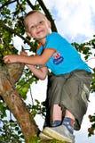 Apple garden Royalty Free Stock Photo