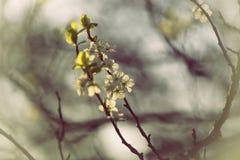 Apple garden in spring time Royalty Free Stock Photos