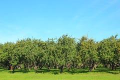 Apple-Garten Lizenzfreies Stockfoto
