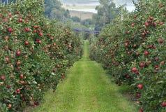 Apple-Garten lizenzfreie stockfotos