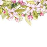 Apple gestalten botanische Illustration Kartendesign mit Apfelblumen und -blatt Botanische Illustration des Aquarells lokalisiert Lizenzfreie Stockfotografie