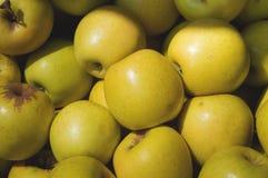 Apple giallo da vendere sul mercato Fondo di agricoltura Fine-u Fotografie Stock