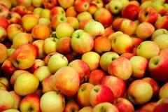 Apple giallo e rosso fotografie stock