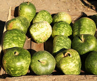 Apple Gourd Royalty Free Stock Photography