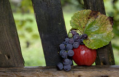 Apple. A red apple and grapes on a fence in a rainy autumn afternoon Stock Image