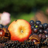 Apple grapes and others Royalty Free Stock Images