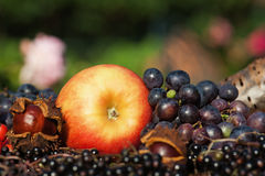 Apple grapes and wild fruits Stock Photography